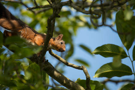 Squirrel climbing tree, looking down