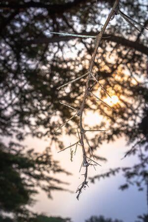 Sunrise view of Ishasha river, with acacia thorn tree (Acacia sensu lato) growing and the reflections on the water, Queen Elizabeth National Park, Ishasha, Uganda, Africa