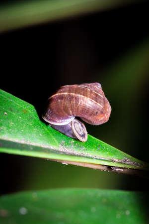 Snail hiding during the day, Nosy Komba, Madagascar Reklamní fotografie