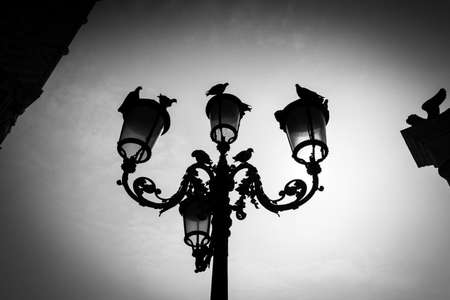 View of an old street light with pigeons sitting on it, in the city of Venice, Venice, Italy, Europe