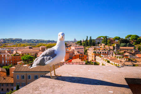 Sea Gull bird sitting looking at the view of the Roman Forum, Ancient Roman ruins in Rome, Rome, Italy, Europe Reklamní fotografie