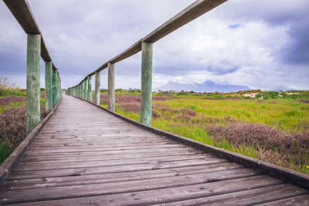View of  Table Mountain with a wooden board walk running through a wetland park, Cape Town, South Africa Imagens