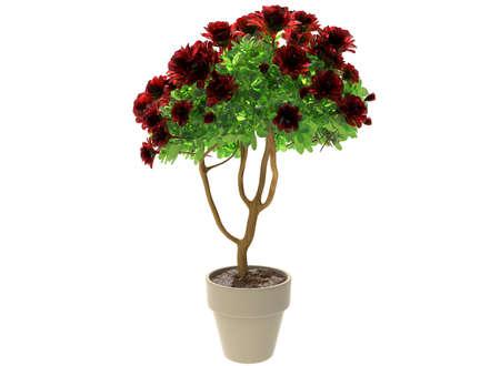 plant pot: 3d illustration of plant in the pot.