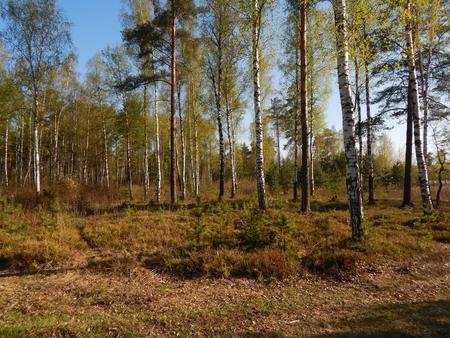 glades: forest glades