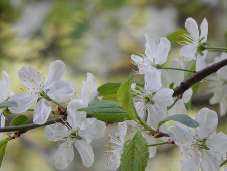 http://us.123rf.com/450wm/avatap/avatap1505/avatap150500043/39988148-closeup-of-spring-flowers-on-a-tree.jpg