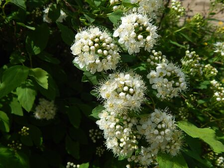 http://us.123rf.com/450wm/avatap/avatap1505/avatap150500140/44622336-белые-цветы.jpg