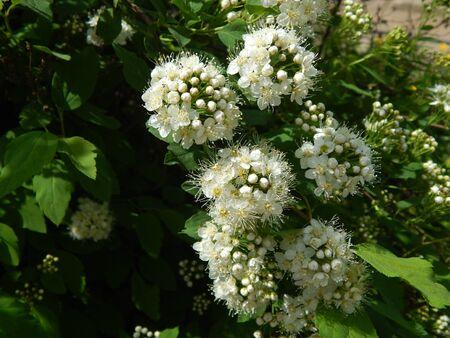 http://us.123rf.com/450wm/avatap/avatap1505/avatap150500140/44622336-white-flowers.jpg