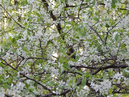 http://us.123rf.com/450wm/avatap/avatap1505/avatap150500153/40594743-lilac-flowers-closeup.jpg