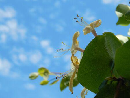http://us.123rf.com/450wm/avatap/avatap1506/avatap150600032/40979675-flowers-against-the-sky.jpg