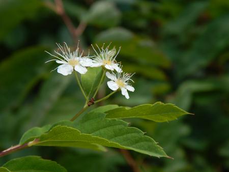 http://us.123rf.com/450wm/avatap/avatap1508/avatap150800097/43465231-wild-white-flowers.jpg