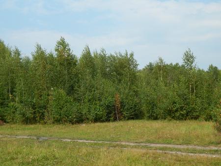 woodland scenery: woodland scenery