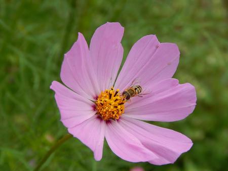 http://us.123rf.com/450wm/avatap/avatap1508/avatap150800358/44101021-insect-on-a-flower.jpg