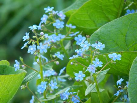 http://us.123rf.com/450wm/avatap/avatap1508/avatap150800515/44382475-garden-flowers.jpg