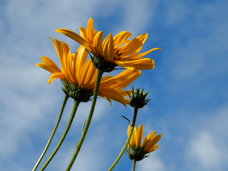 http://us.123rf.com/450wm/avatap/avatap1509/avatap150900046/44565507-Желтый-цветок-на-фоне-голубого-неба.jpg