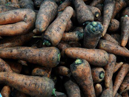 botanical farms: carrot
