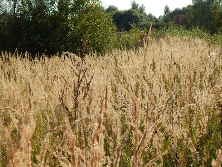 bluegrass: Bluegrass Meadow