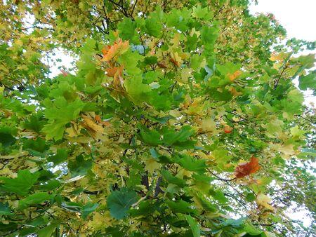 road autumnal: autumn leaves on trees Stock Photo
