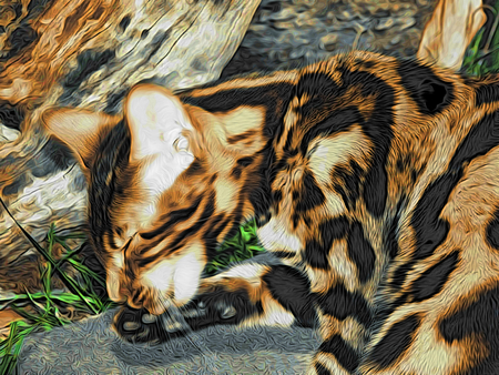 bengal: Figure Bengal cat