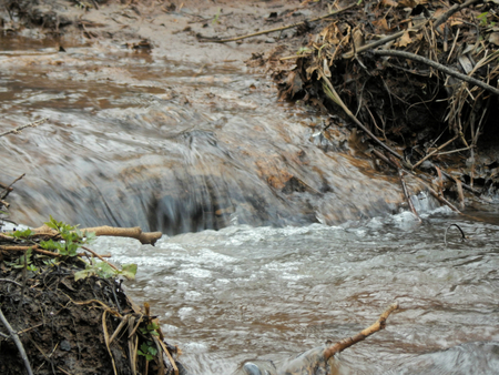 forest stream: Forest stream spring