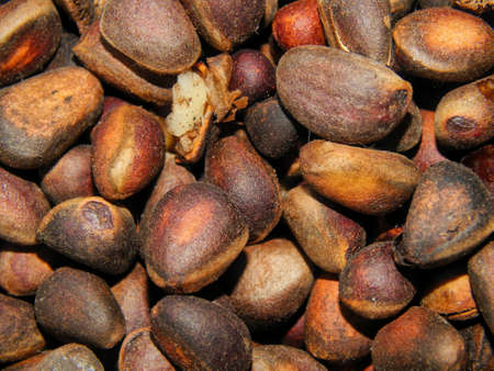 pine nuts: Pine nuts closeup