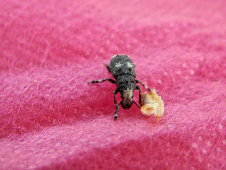 barbel: Forest beetle barbel on fabric