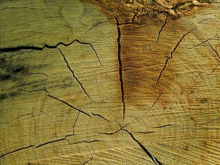 sawn: Texture closeup of sawn wood