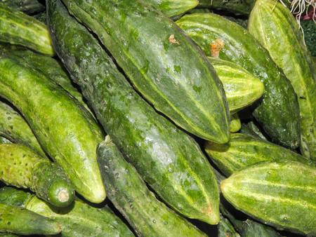 cuke: Fresh cucumbers closeup
