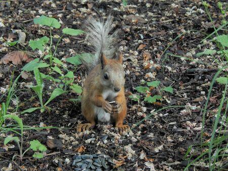 elusive: Squirrel nut found on the ground close-up