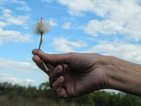 beaty: Hand with dandelion against the sky