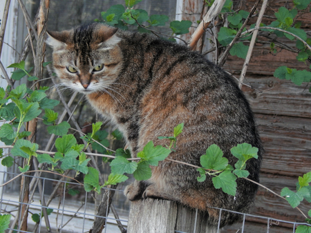 paw smart: Tricky cat sitting on the fence opinion