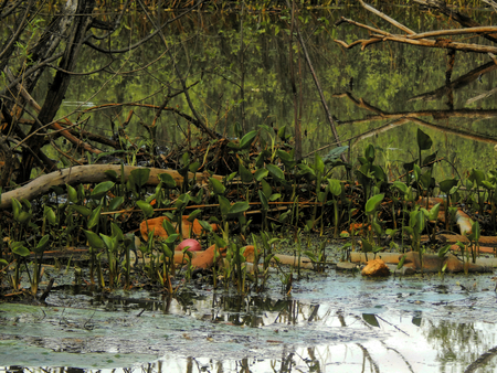 thickets: Thickets of old trees in the river Stock Photo