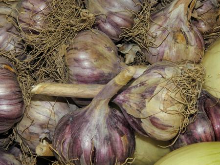 clean artery: Fresh garlic and onion closeup Stock Photo