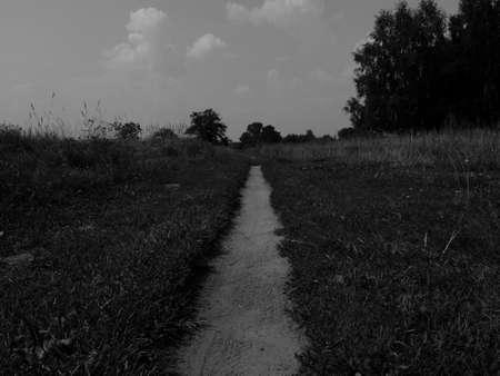 flowering field: Footpath on a flowering field in black and white image