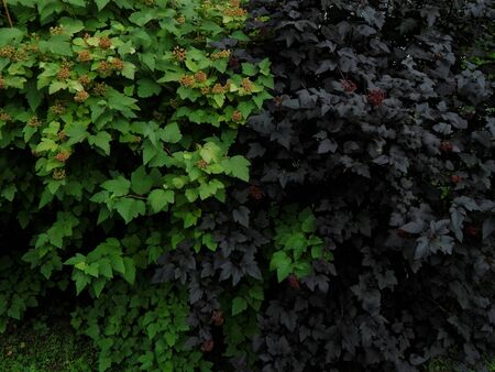 shrubs: Flowering shrubs in the garden