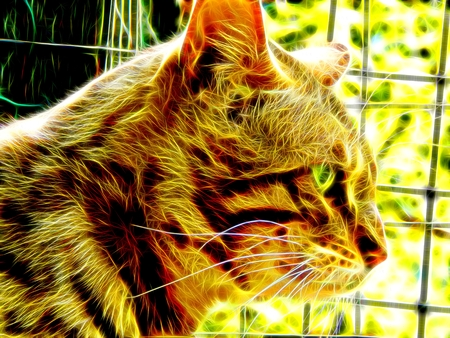 spotted fur: Image of a Bengal cat in neon color