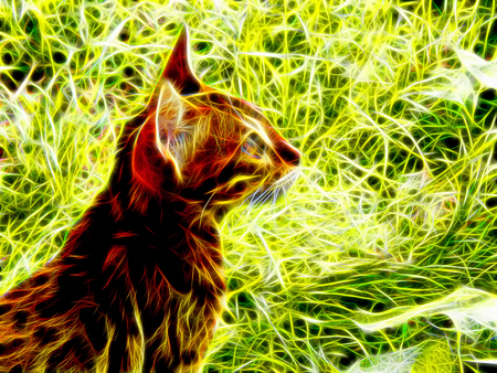 bengal light: Image of a Bengal cat in neon light