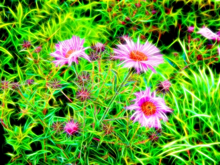 aster: Image of flowers aster in neon light Stock Photo
