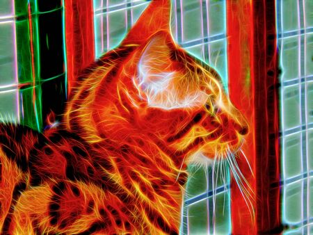 bengal light: Picture of a cat in neon light Stock Photo