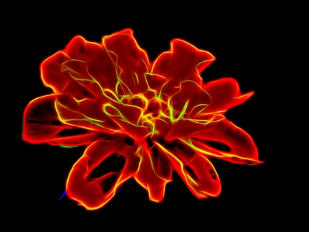 Abstract image of flowers in neon light