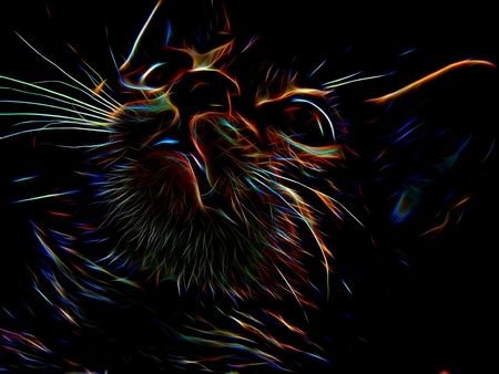 Neon cat on a black background