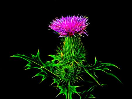 新しい光の中で花草原アザミ