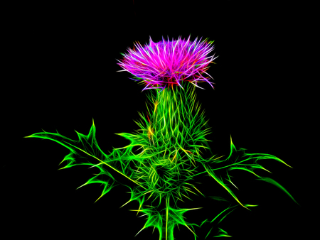 새 빛에 꽃 초원 엉겅퀴 스톡 콘텐츠