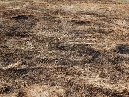 Arson grass in spring on the field