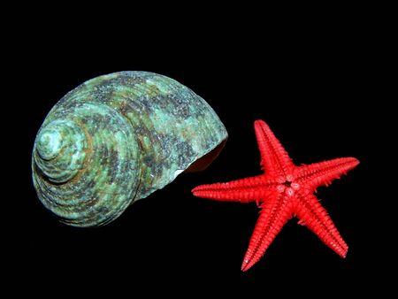 Sea shells close-up on a black background