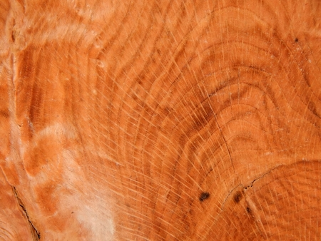 The texture of natural wood is the root of oak. Wood veneer for furniture production