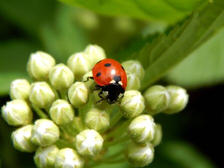 ladybug in the wild close up Imagens