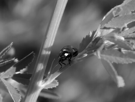 ladybug in the wild close up 免版税图像