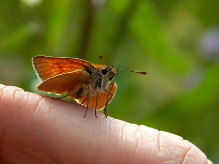Wild butterfly in the wild close up