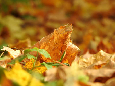 Beautiful landscape of autumn leaves in nature close up Stok Fotoğraf