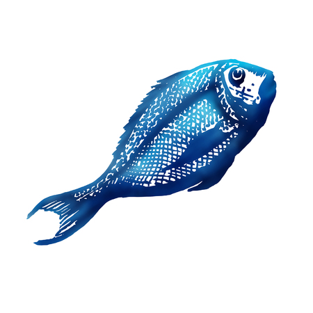 dorado: Sea  food sketch.